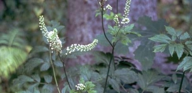 (מאמר דעה) רפואת צמחים ספורטיבית: הטיפול הפנימי
